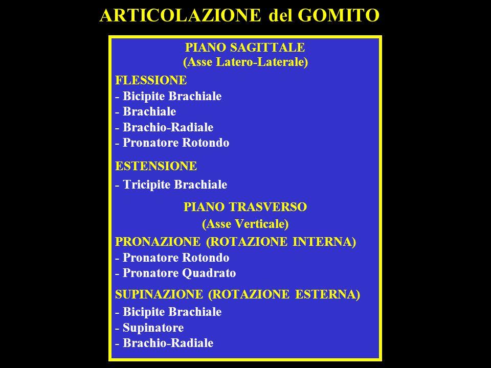 ARTICOLAZIONE del GOMITO PIANO SAGITTALE (Asse Latero-Laterale) FLESSIONE - Bicipite Brachiale - Brachiale - Brachio-Radiale - Pronatore Rotondo ESTEN