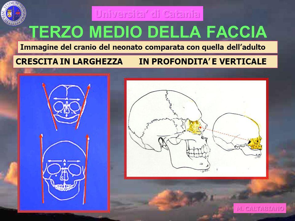TERZO MEDIO DELLA FACCIA CRESCITA IN LARGHEZZA IN PROFONDITA E VERTICALE Immagine del cranio del neonato comparata con quella delladulto