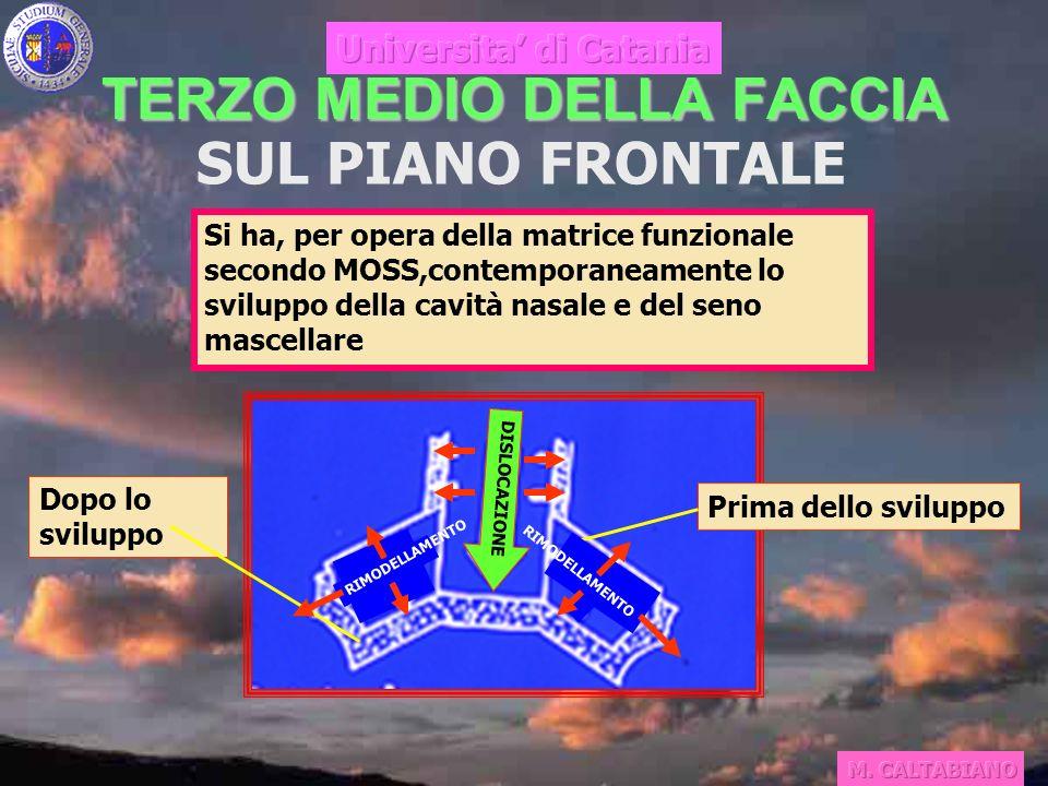 TERZO MEDIO DELLA FACCIA SUL PIANO FRONTALE Si ha, per opera della matrice funzionale secondo MOSS,contemporaneamente lo sviluppo della cavità nasale e del seno mascellare Prima dello sviluppo Dopo lo sviluppo DISLOCAZIONE RIMODELLAMENTO