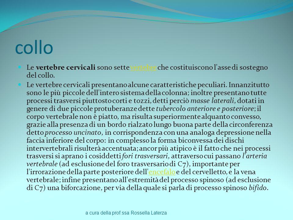 a cura della prof.ssa Rossella Laterza collo Le vertebre cervicali sono sette vertebre che costituiscono l'asse di sostegno del collo.vertebre Le vert