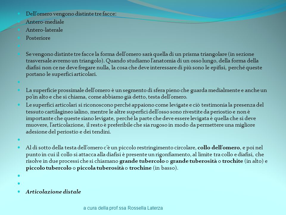 a cura della prof.ssa Rossella Laterza Dellomero vengono distinte tre facce: Antero-mediale Antero-laterale Posteriore Se vengono distinte tre facce l
