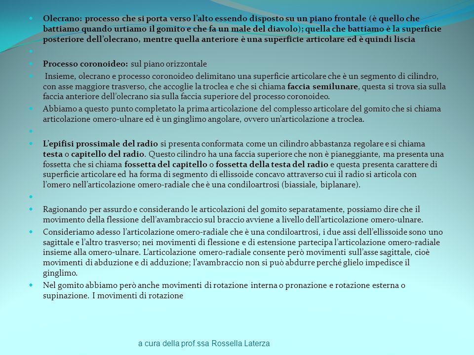a cura della prof.ssa Rossella Laterza Olecrano: processo che si porta verso lalto essendo disposto su un piano frontale (è quello che battiamo quando
