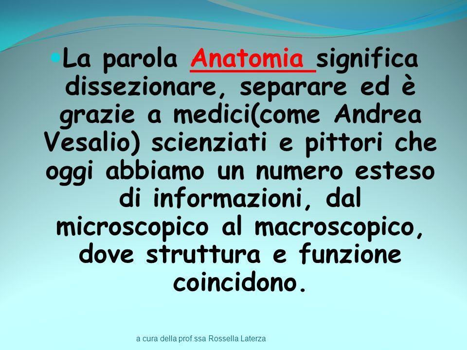 a cura della prof.ssa Rossella Laterza La parola Anatomia significa dissezionare, separare ed è grazie a medici(come Andrea Vesalio) scienziati e pitt