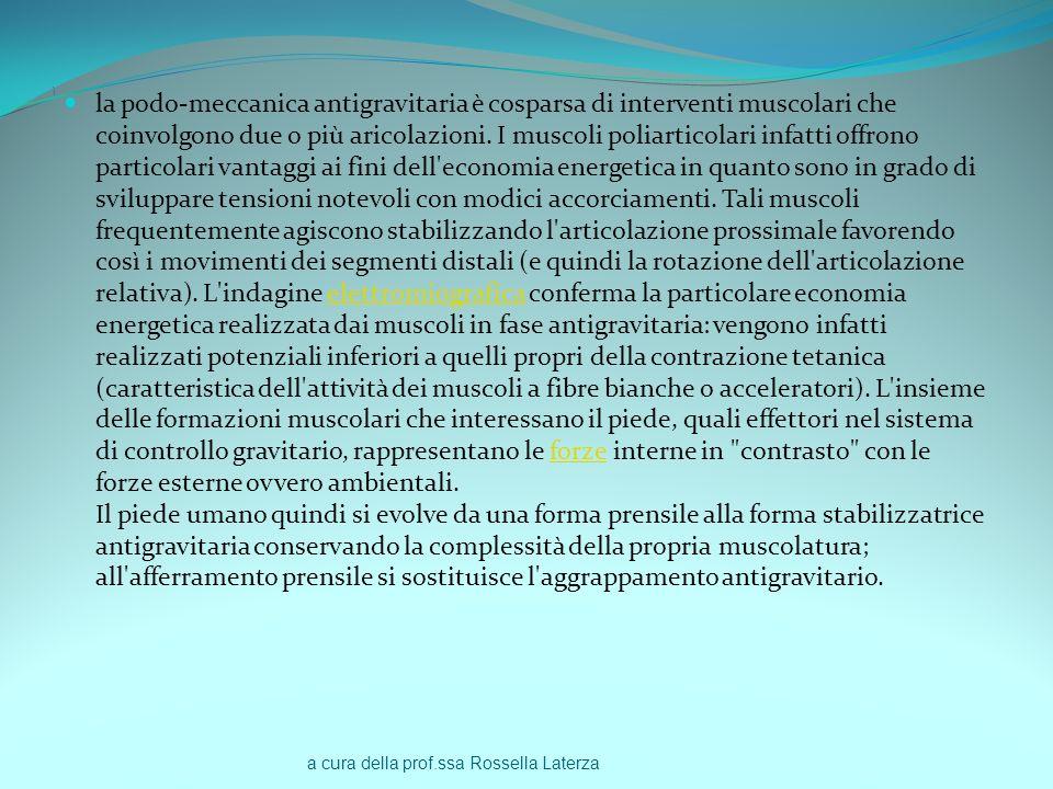 a cura della prof.ssa Rossella Laterza ì la podo-meccanica antigravitaria è cosparsa di interventi muscolari che coinvolgono due o più aricolazioni. I