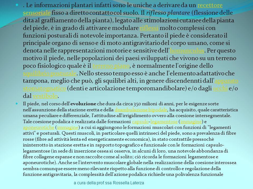 a cura della prof.ssa Rossella Laterza i. Le informazioni plantari infatti sono le uniche a derivare da un recettore sensoriale fisso a diretto contat