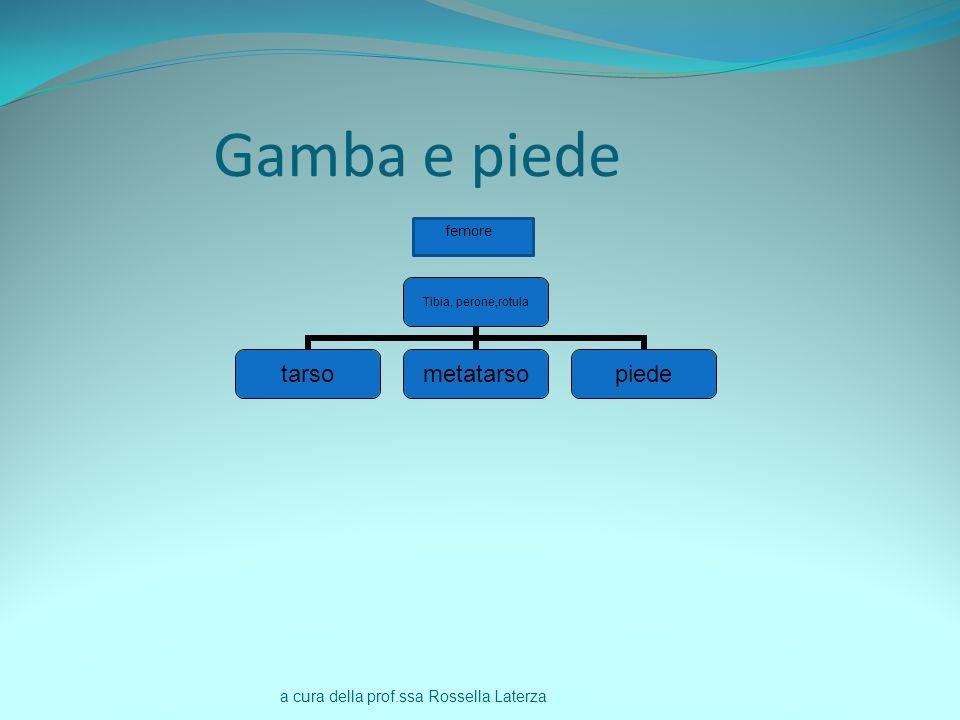 a cura della prof.ssa Rossella Laterza Gamba e piede Tibia, perone,rotula tarsometatarsopiede femore