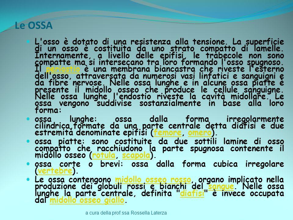 a cura della prof.ssa Rossella Laterza Le OSSA L'osso è dotato di una resistenza alla tensione. La superficie di un osso è costituita da uno strato co