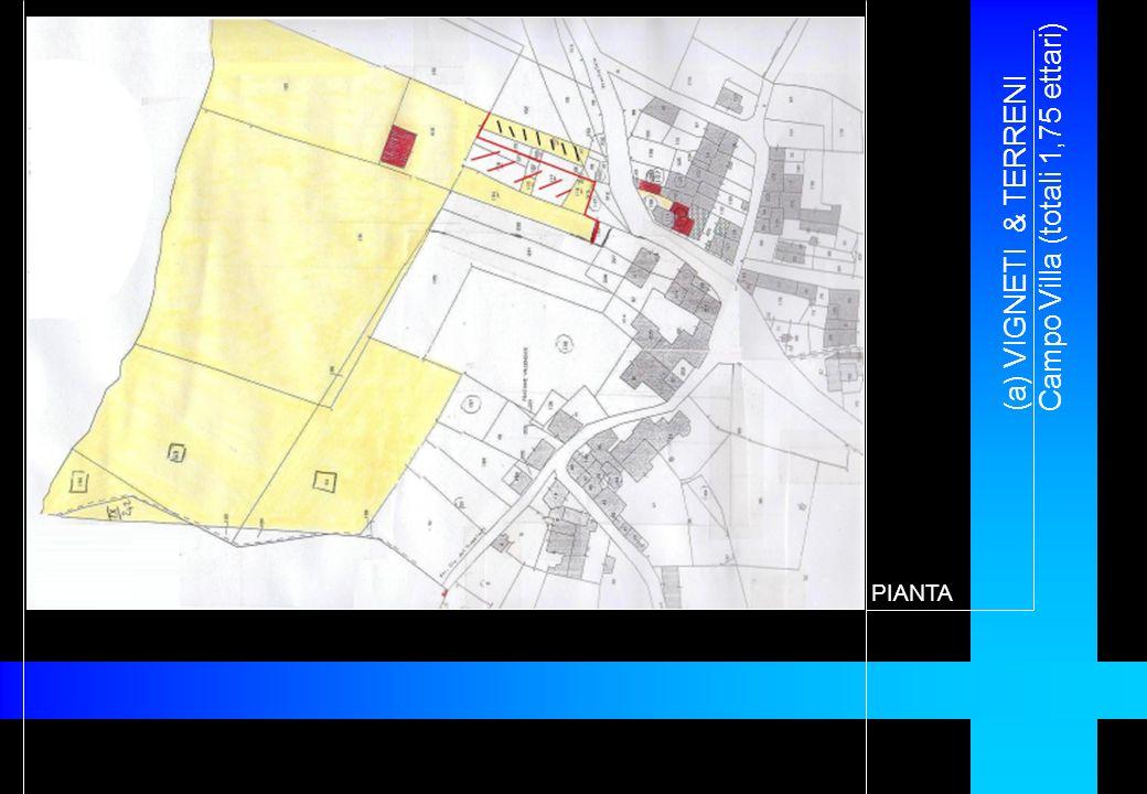 (a) VIGNETI & TERRENI Campo Villa (totali 1,75 ettari) PIANTA