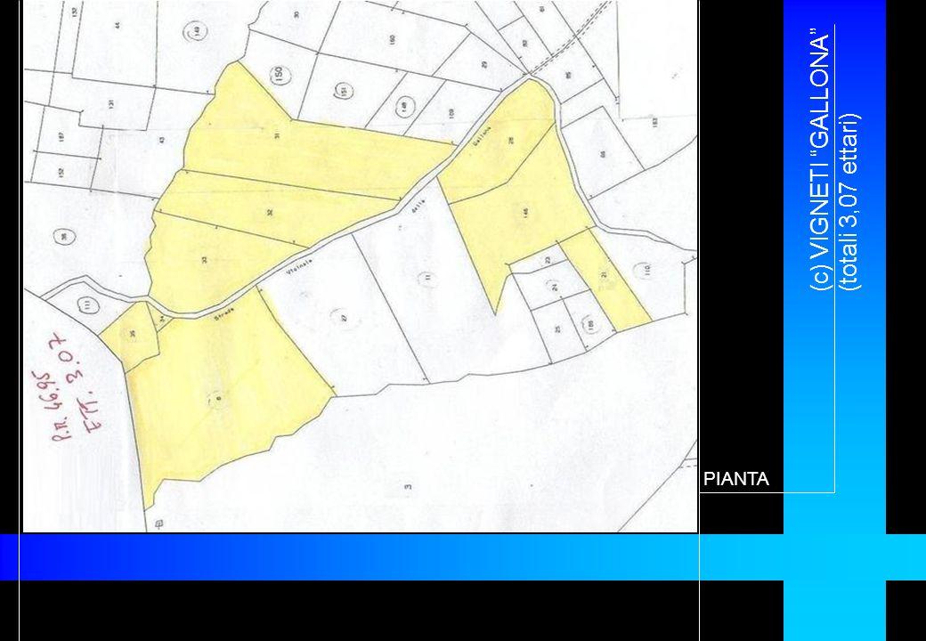 (c) VIGNETI GALLONA (totali 3,07 ettari) PIANTA