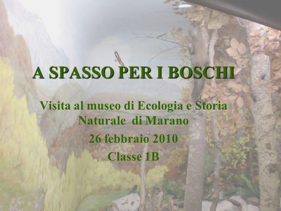 A SPASSO PER I BOSCHI Visita al museo di Ecologia e Storia Naturale di Marano 26 febbraio 2010 Classe 1B