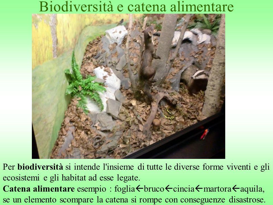 Biodiversità e catena alimentare Per biodiversità si intende l'insieme di tutte le diverse forme viventi e gli ecosistemi e gli habitat ad esse legate