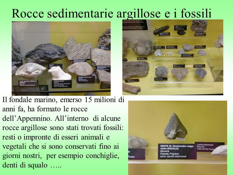 Rocce sedimentarie argillose e i fossili Il fondale marino, emerso 15 milioni di anni fa, ha formato le rocce dellAppennino. Allinterno di alcune rocc
