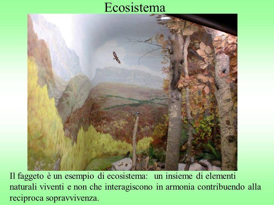 Ecosistema Il faggeto è un esempio di ecosistema: un insieme di elementi naturali viventi e non che interagiscono in armonia contribuendo alla recipro