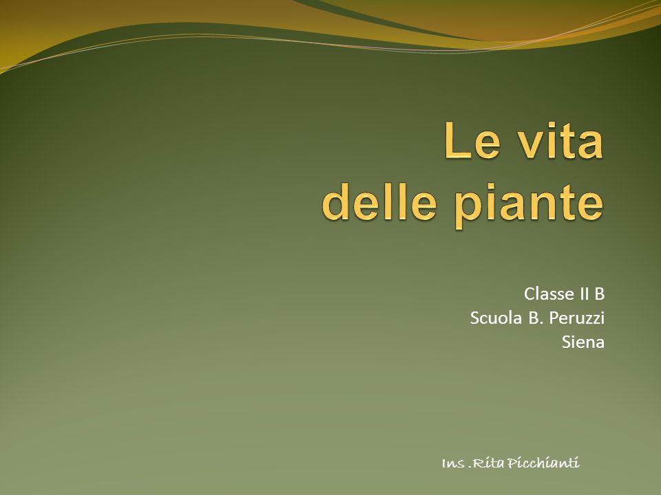 Classe II B Scuola B. Peruzzi Siena Ins.Rita Picchianti