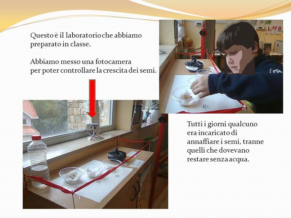 Questo è il laboratorio che abbiamo preparato in classe. Abbiamo messo una fotocamera per poter controllare la crescita dei semi. Tutti i giorni qualc