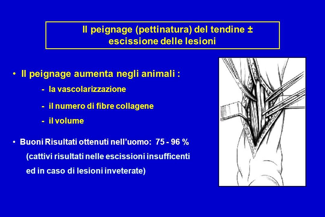 Il peignage (pettinatura) del tendine ± escissione delle lesioni Il peignage aumenta negli animali : - la vascolarizzazione - il numero di fibre collagene - il volume Buoni Risultati ottenuti nelluomo: 75 - 96 % (cattivi risultati nelle escissioni insufficenti ed in caso di lesioni inveterate)