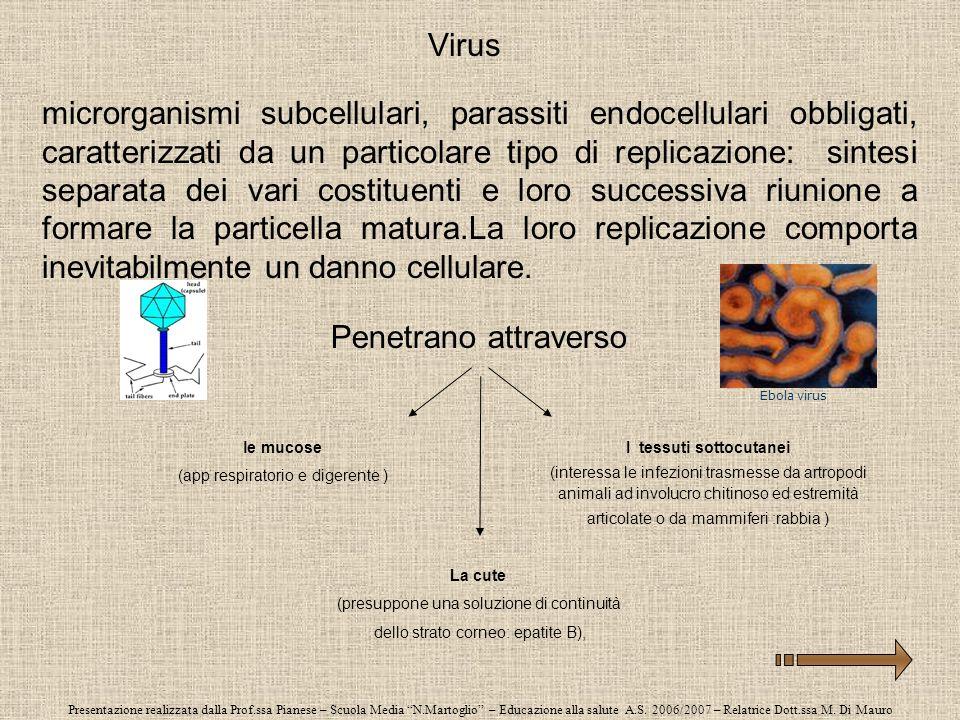 Presentazione realizzata dalla Prof.ssa Pianese – Scuola Media N.Martoglio – Educazione alla salute A.S. 2006/2007 – Relatrice Dott.ssa M. Di Mauro Vi