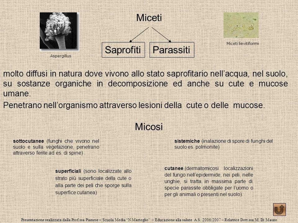 Presentazione realizzata dalla Prof.ssa Pianese – Scuola Media N.Martoglio – Educazione alla salute A.S. 2006/2007 – Relatrice Dott.ssa M. Di Mauro Mi