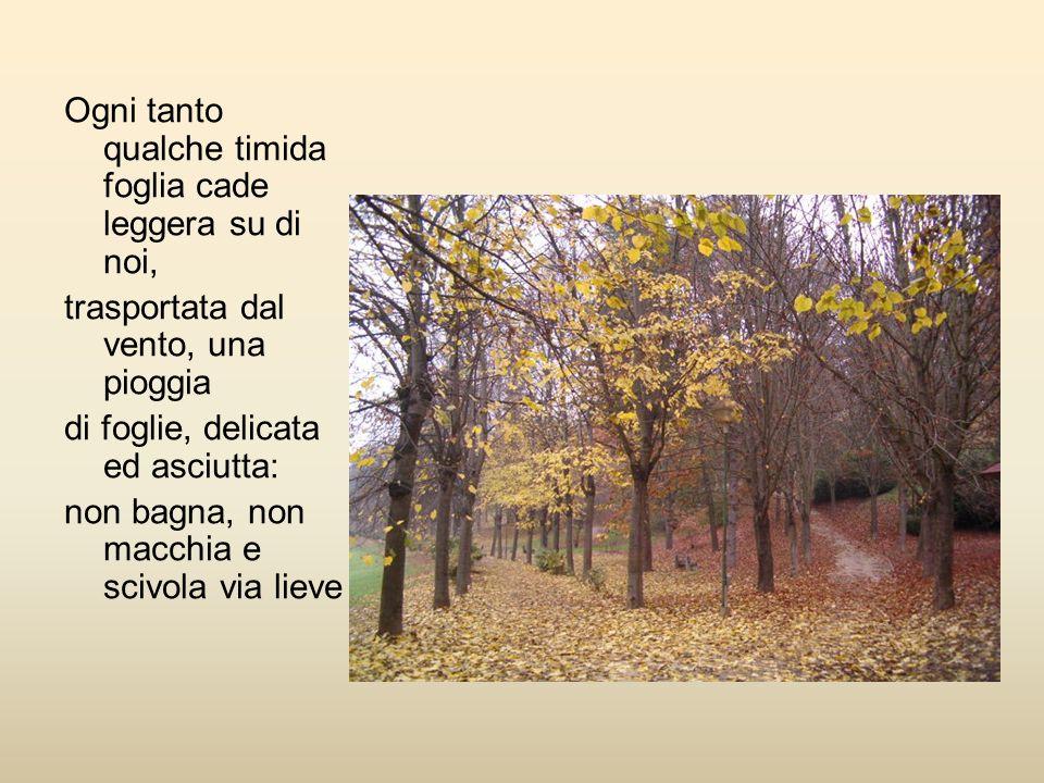 Ogni tanto qualche timida foglia cade leggera su di noi, trasportata dal vento, una pioggia di foglie, delicata ed asciutta: non bagna, non macchia e scivola via lieve