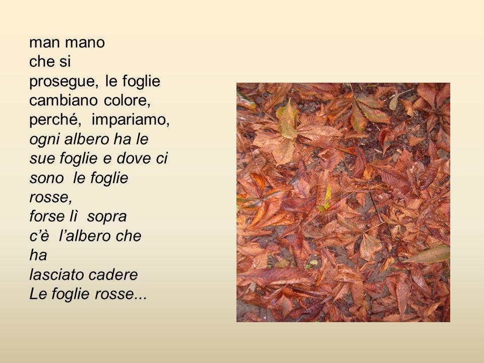 man mano che si prosegue, le foglie cambiano colore, perché, impariamo, ogni albero ha le sue foglie e dove ci sono le foglie rosse, forse lì sopra cè lalbero che ha lasciato cadere Le foglie rosse...