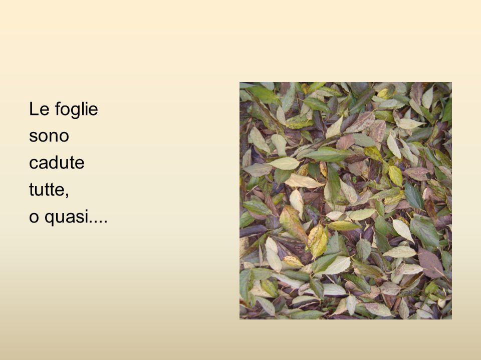 Le foglie sono cadute tutte, o quasi....