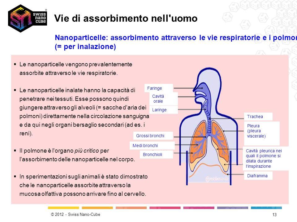 © 2012 - Swiss Nano-Cube 13 Le nanoparticelle vengono prevalentemente assorbite attraverso le vie respiratorie. Le nanoparticelle inalate hanno la cap