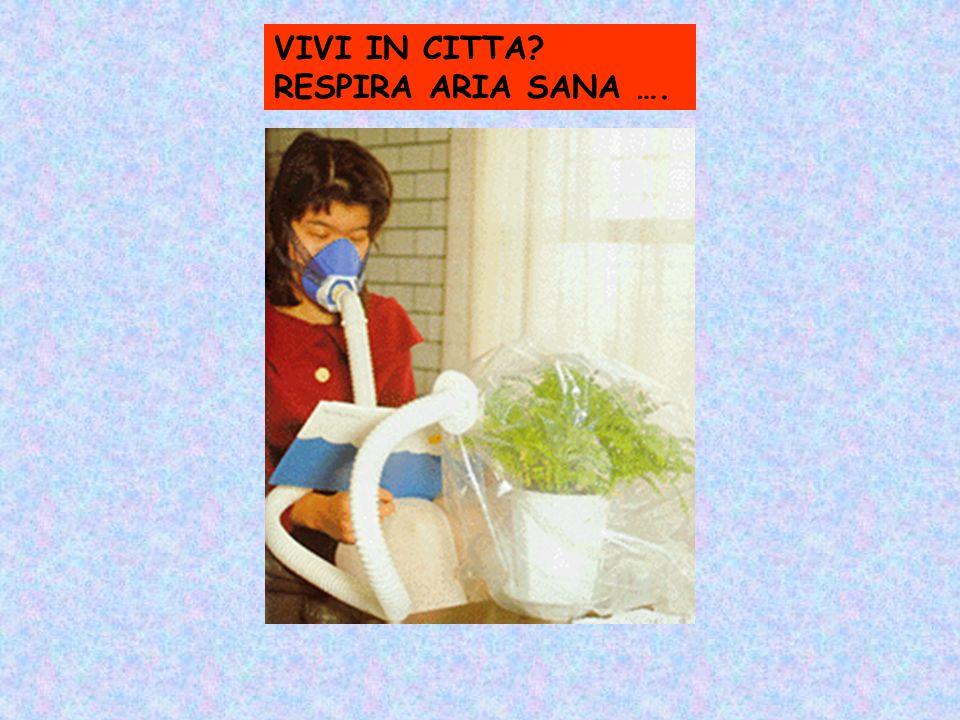 VIVI IN CITTA? RESPIRA ARIA SANA ….