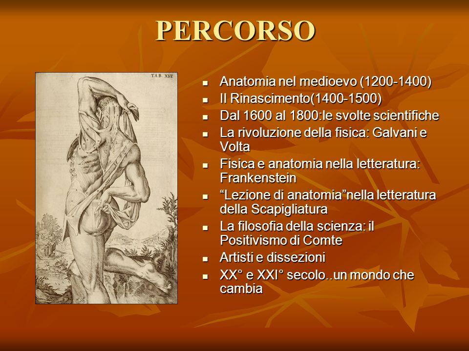 PERCORSO Anatomia nel medioevo (1200-1400) Anatomia nel medioevo (1200-1400) Il Rinascimento(1400-1500) Il Rinascimento(1400-1500) Dal 1600 al 1800:le
