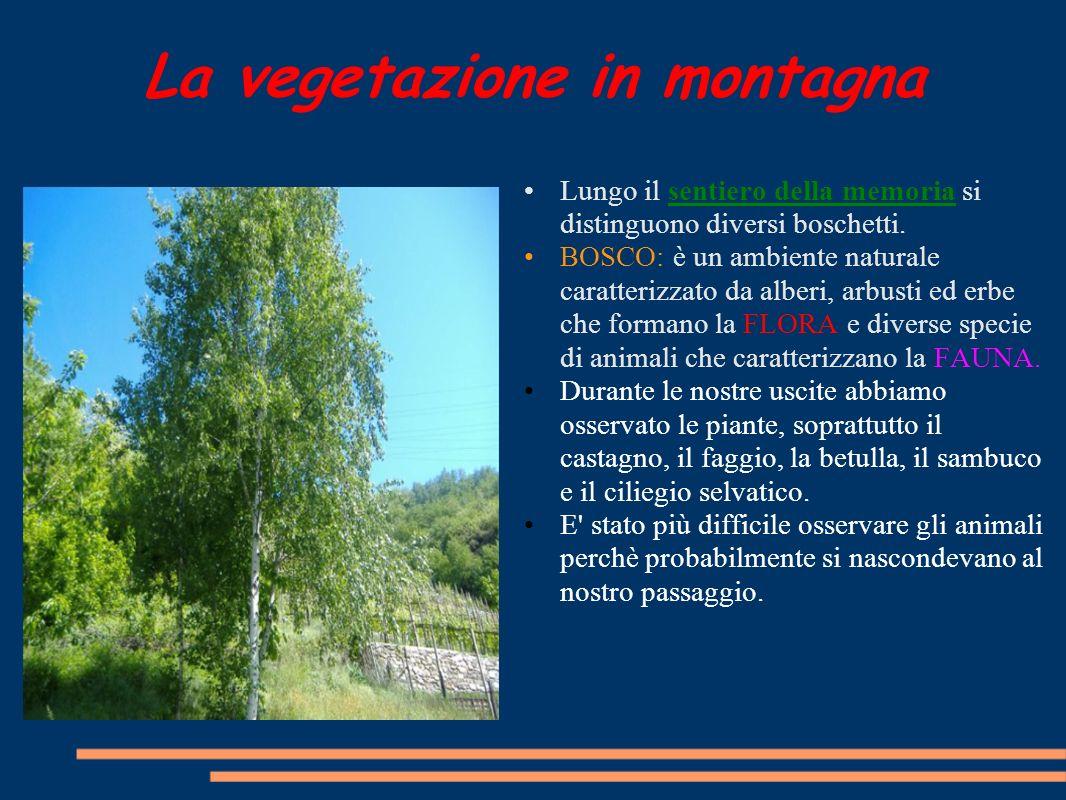 La vegetazione in montagna Lungo il sentiero della memoria si distinguono diversi boschetti. BOSCO: è un ambiente naturale caratterizzato da alberi, a