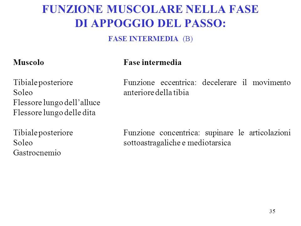 34 FUNZIONE MUSCOLARE NELLA FASE DI APPOGGIO DEL PASSO: CONTATTO TALLONE-SUOLO (A) Muscolo Tibiale anteriore Estensore lungo dellalluce Estensore comu
