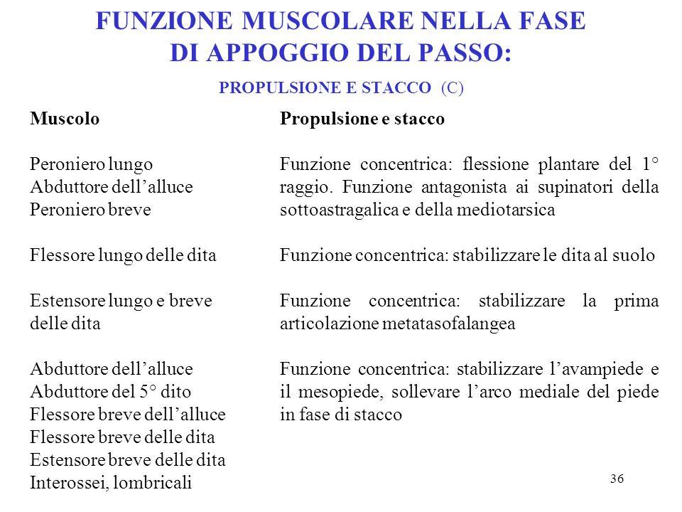 35 FUNZIONE MUSCOLARE NELLA FASE DI APPOGGIO DEL PASSO: FASE INTERMEDIA (B) Muscolo Tibiale posteriore Soleo Flessore lungo dellalluce Flessore lungo