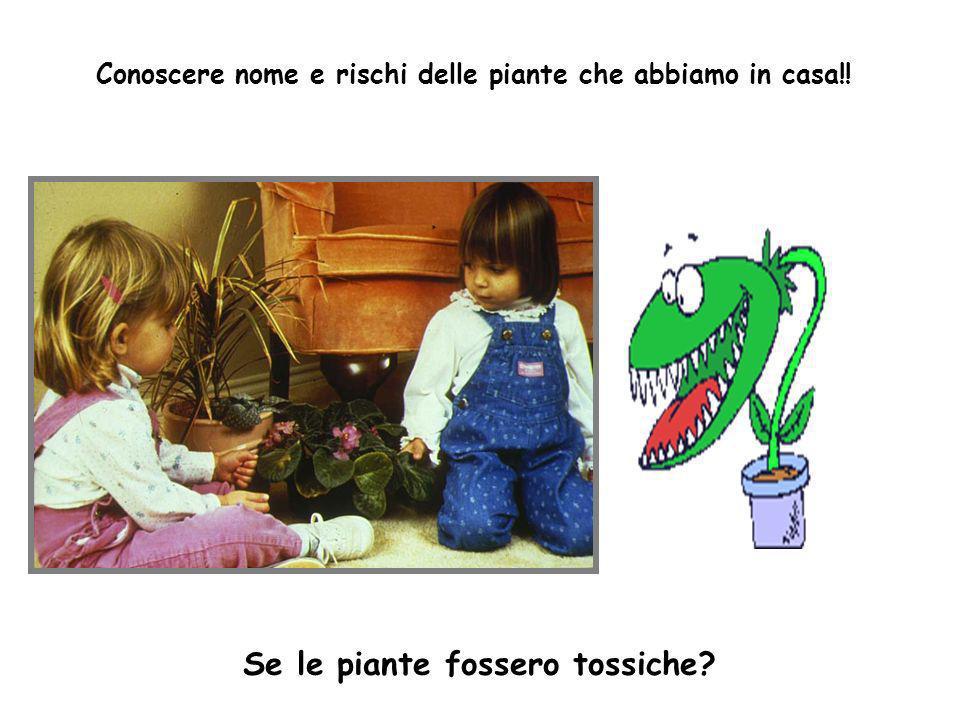 Conoscere nome e rischi delle piante che abbiamo in casa!! Se le piante fossero tossiche?