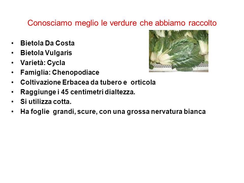 Conosciamo meglio le verdure che abbiamo raccolto Bietola Da Costa Bietola Vulgaris Varietà: Cycla Famiglia: Chenopodiace Coltivazione Erbacea da tube