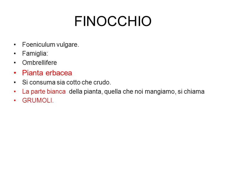 FINOCCHIO Foeniculum vulgare. Famiglia: Ombrellifere Pianta erbacea Si consuma sia cotto che crudo. La parte bianca della pianta, quella che noi mangi