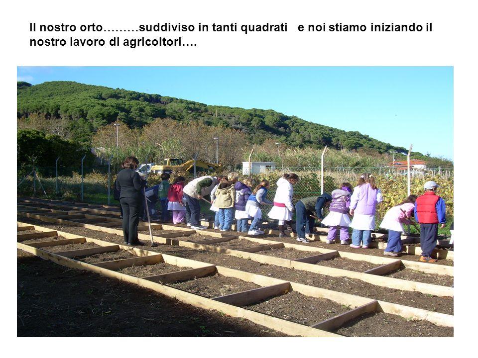 Il nostro orto………suddiviso in tanti quadrati e noi stiamo iniziando il nostro lavoro di agricoltori….