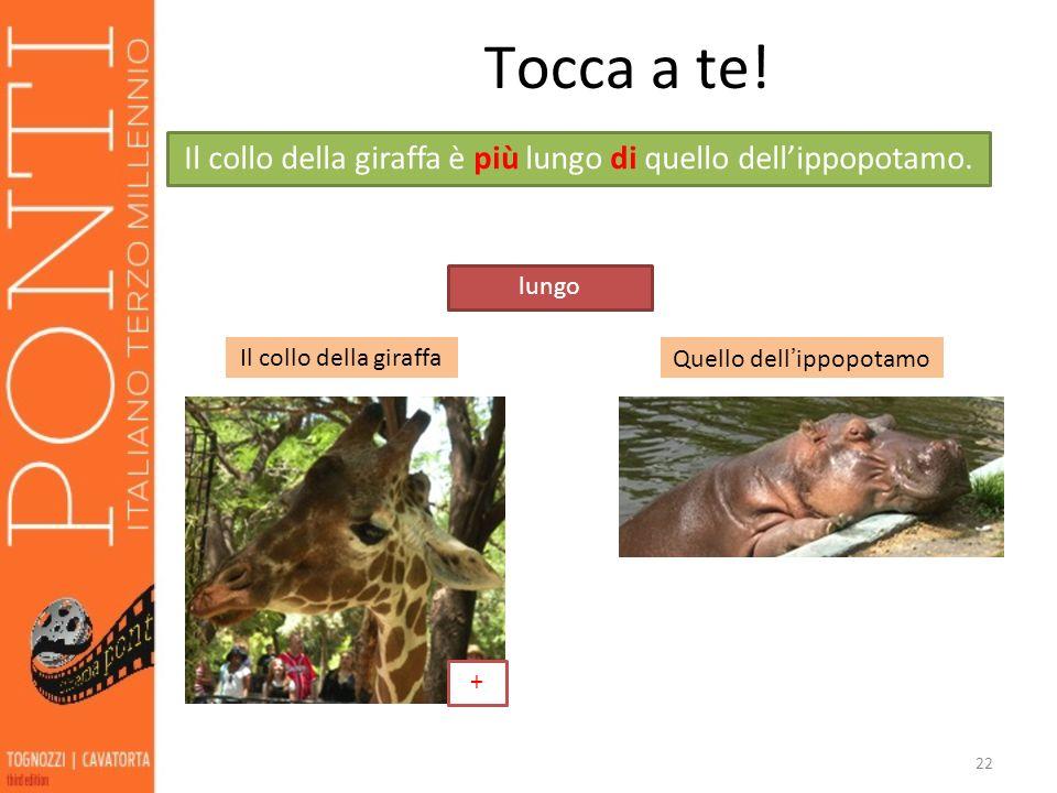 22 Tocca a te! Il collo della giraffaQuello dellippopotamo lungo + Il collo della giraffa è più lungo di quello dellippopotamo.