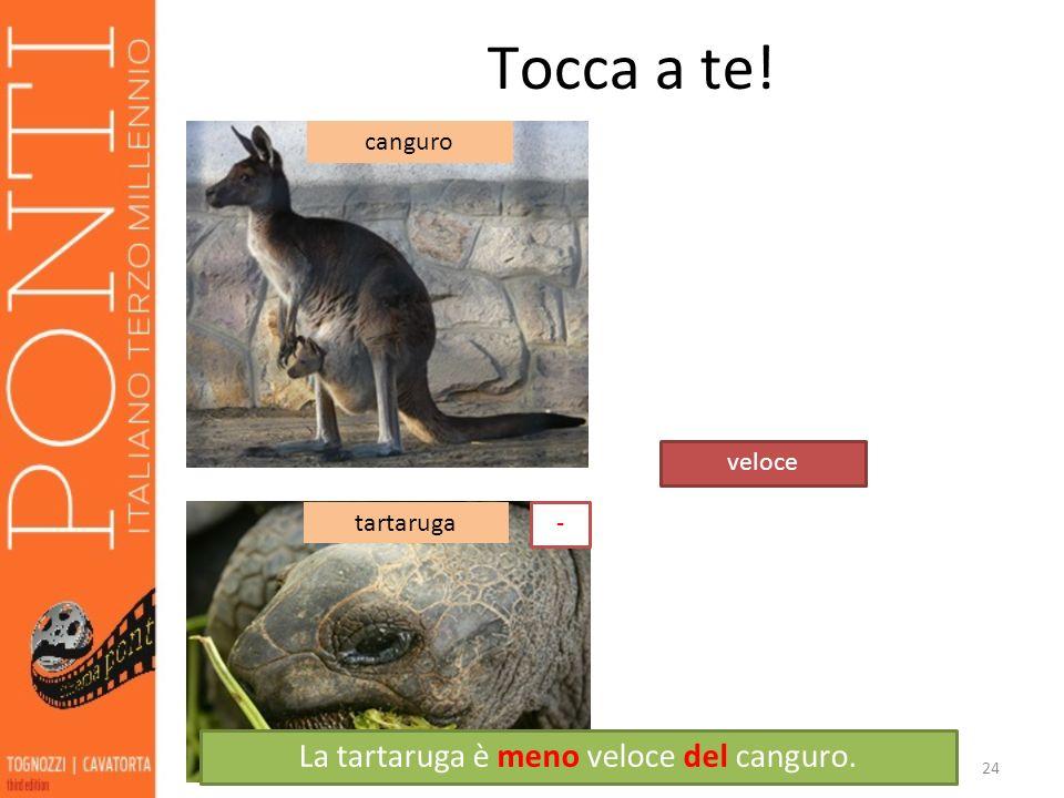 24 Tocca a te! veloce canguro tartaruga La tartaruga è meno veloce del canguro. -
