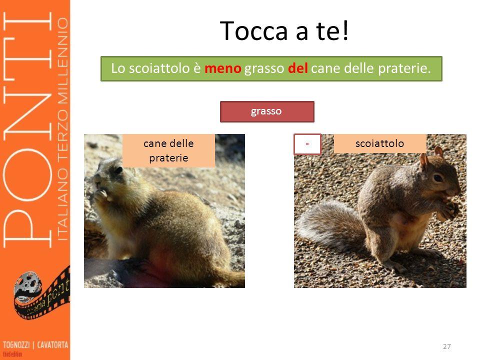 27 Tocca a te! cane delle praterie scoiattolo grasso Lo scoiattolo è meno grasso del cane delle praterie. -
