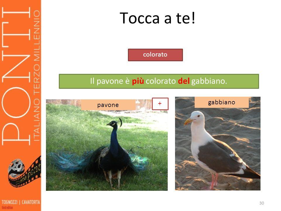 30 Tocca a te! pavone gabbiano colorato Il pavone è più colorato del gabbiano. +