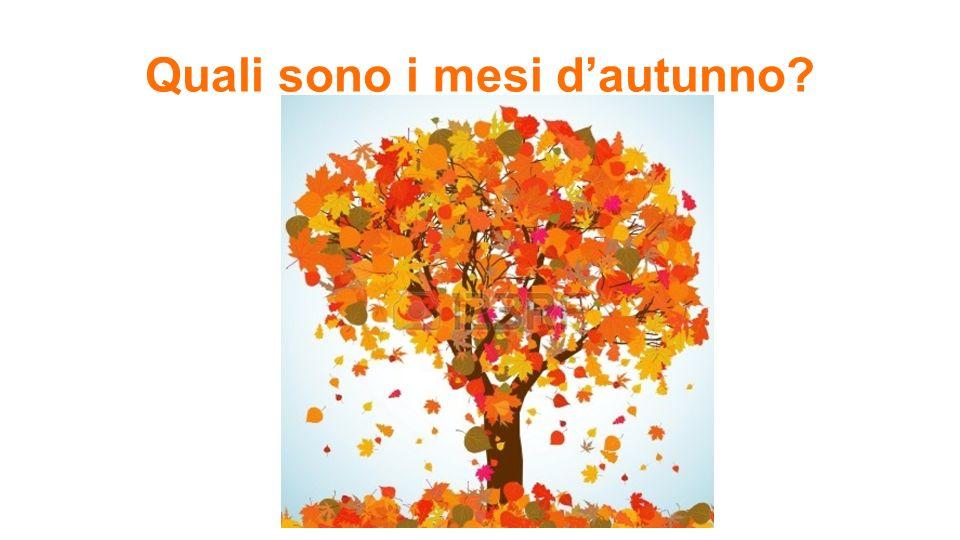 Quale sport si fa in autunno in Italia? Si gioca a calcio.