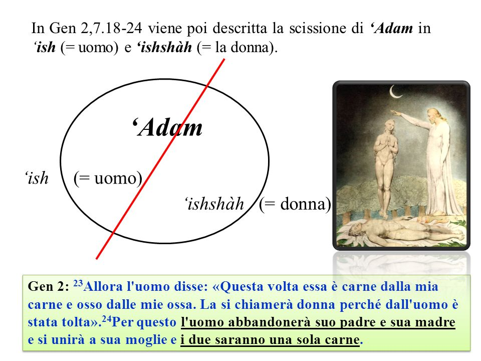 In Gen 2,7.18-24 viene poi descritta la scissione di Adam inish (= uomo) e ishshàh (= la donna). ishshàh (= donna) Adam ish (= uomo) Gen 2: 23 Allora