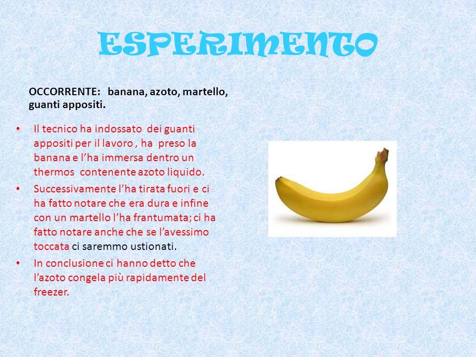 ESPERIMENTO OCCORRENTE: banana, azoto, martello, guanti appositi. Il tecnico ha indossato dei guanti appositi per il lavoro, ha preso la banana e lha