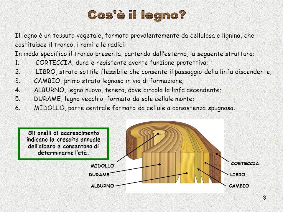 3 Il legno è un tessuto vegetale, formato prevalentemente da cellulosa e lignina, che costituisce il tronco, i rami e le radici. In modo specifico il