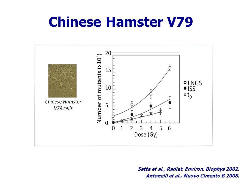 Chinese Hamster V79 Satta et al., Radiat. Environ.