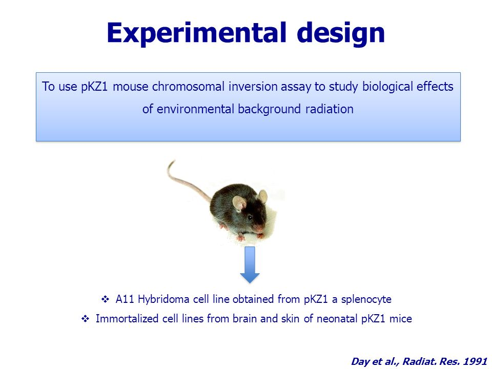 Experimental design A11 Hybridoma cell line obtained from pKZ1 a splenocyte Immortalized cell lines from brain and skin of neonatal pKZ1 mice To use pKZ1 mouse chromosomal inversion assay to study biological effects of environmental background radiation Day et al., Radiat.