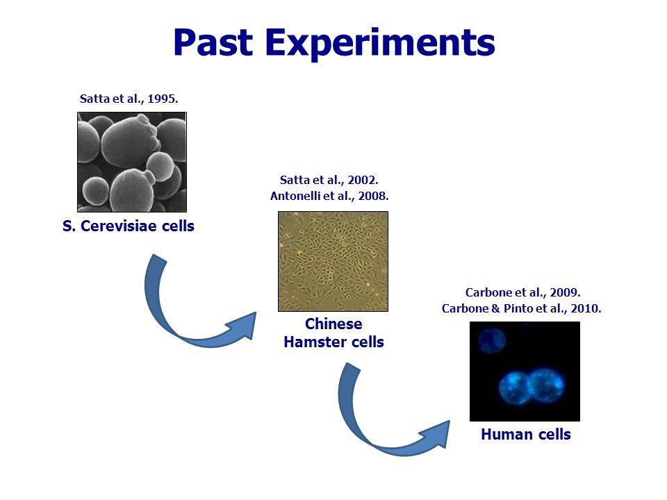 S. Cerevisiae D7 cells Satta et al., Mutat. Res. 1995.