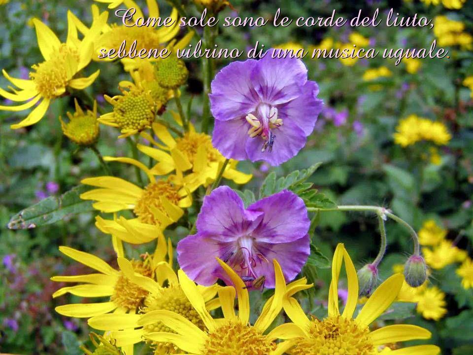 Cantate e danzate insieme e siate giocondi, ma ognuno di voi sia solo.