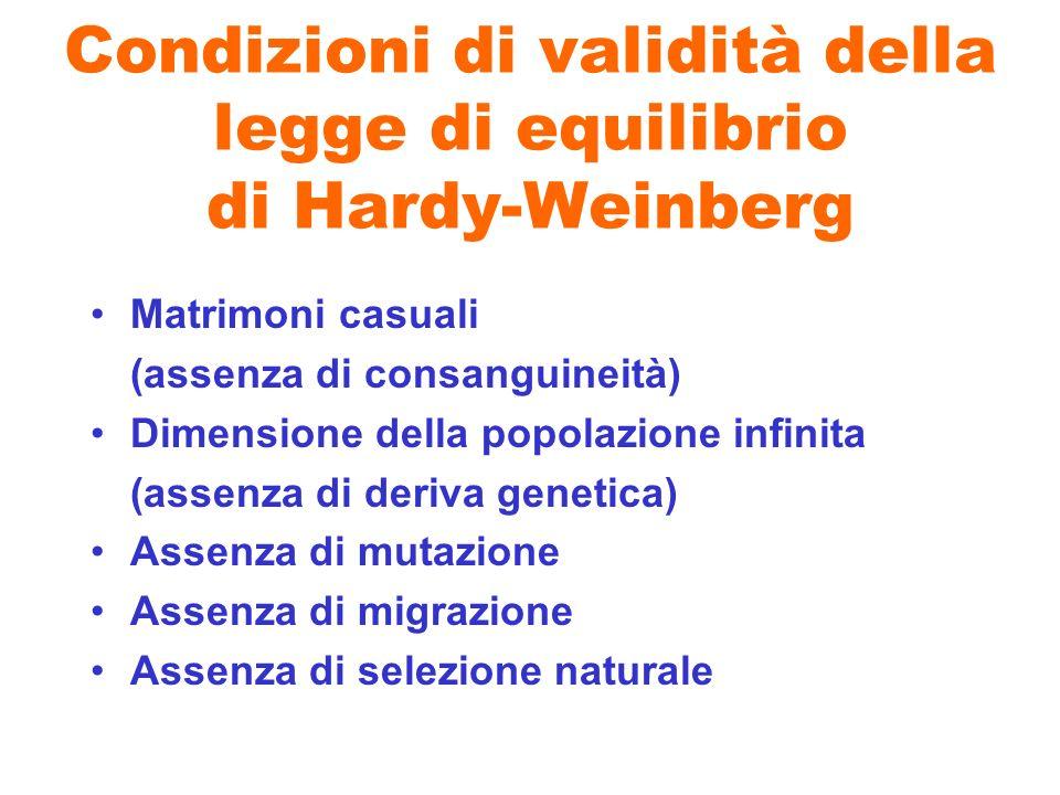 Condizioni di validità della legge di equilibrio di Hardy-Weinberg Matrimoni casuali (assenza di consanguineità) Dimensione della popolazione infinita