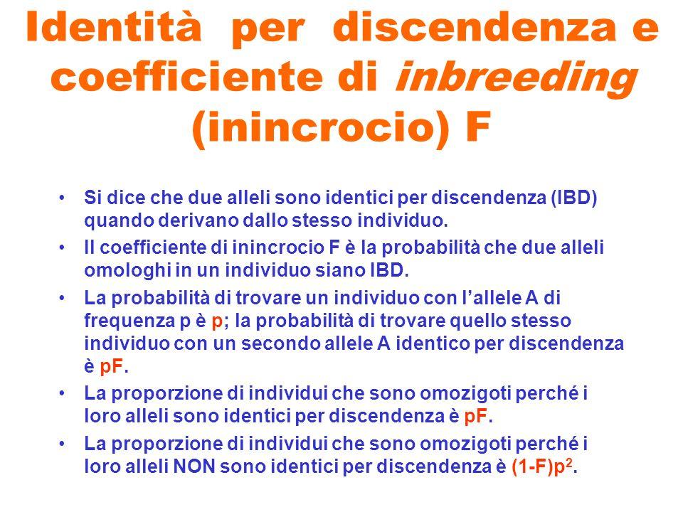 Identità per discendenza e coefficiente di inbreeding (inincrocio) F Si dice che due alleli sono identici per discendenza (IBD) quando derivano dallo