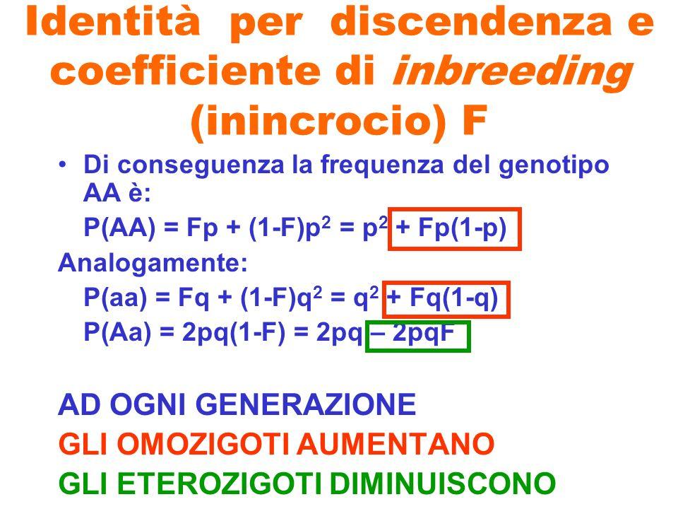 Identità per discendenza e coefficiente di inbreeding (inincrocio) F Di conseguenza la frequenza del genotipo AA è: P(AA) = Fp + (1-F)p 2 = p 2 + Fp(1